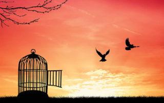 birds flying away image